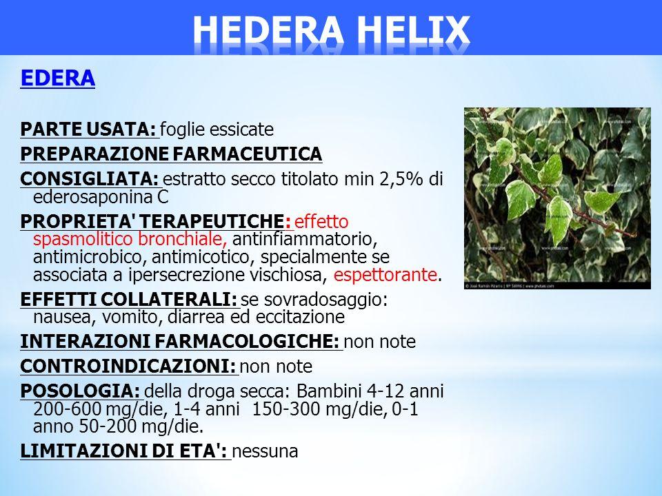 EDERA PARTE USATA: foglie essicate PREPARAZIONE FARMACEUTICA CONSIGLIATA: estratto secco titolato min 2,5% di ederosaponina C PROPRIETA' TERAPEUTICHE: