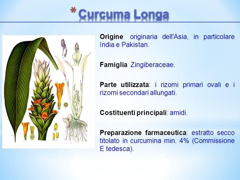 Origine: originaria dell'Asia, in particolare India e Pakistan. Famiglia: Zingiberaceae. Parte utilizzata: i rizomi primari ovali e i rizomi secondari