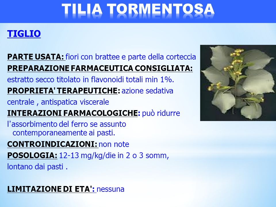 TIGLIO PARTE USATA: fiori con brattee e parte della corteccia PREPARAZIONE FARMACEUTICA CONSIGLIATA: estratto secco titolato in flavonoidi totali min
