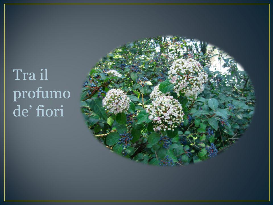 Tra il profumo de fiori