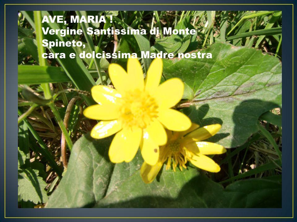 AVE, MARIA ! Vergine Santissima di Monte Spineto, cara e dolcissima Madre nostra