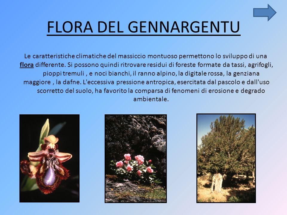 FLORA DEL GENNARGENTU Le caratteristiche climatiche del massiccio montuoso permettono lo sviluppo di una flora differente.