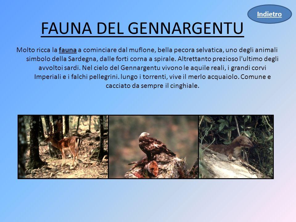 FAUNA DEL GENNARGENTU Molto ricca la fauna a cominciare dal muflone, bella pecora selvatica, uno degli animali simbolo della Sardegna, dalle forti corna a spirale.