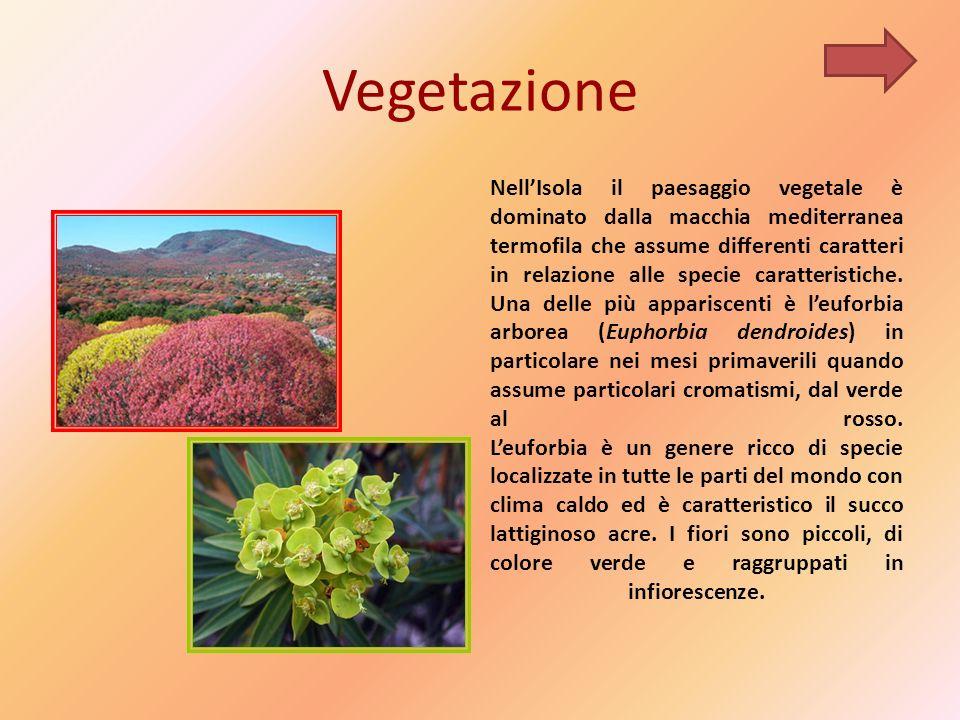 Vegetazione NellIsola il paesaggio vegetale è dominato dalla macchia mediterranea termofila che assume differenti caratteri in relazione alle specie caratteristiche.