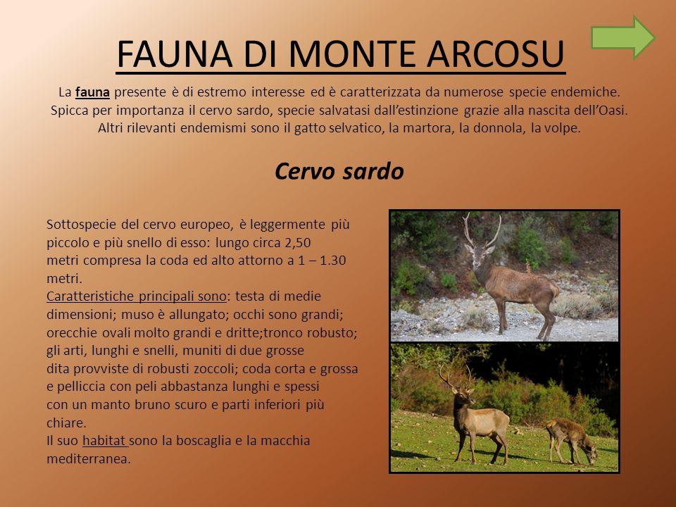 FAUNA DI MONTE ARCOSU La fauna presente è di estremo interesse ed è caratterizzata da numerose specie endemiche.