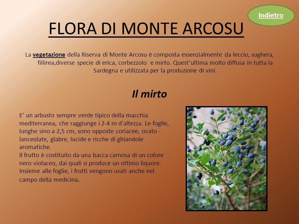 FLORA DI MONTE ARCOSU La vegetazione della Riserva di Monte Arcosu è composta essenzialmente da leccio, sughera, fillirea,diverse specie di erica, corbezzolo e mirto.