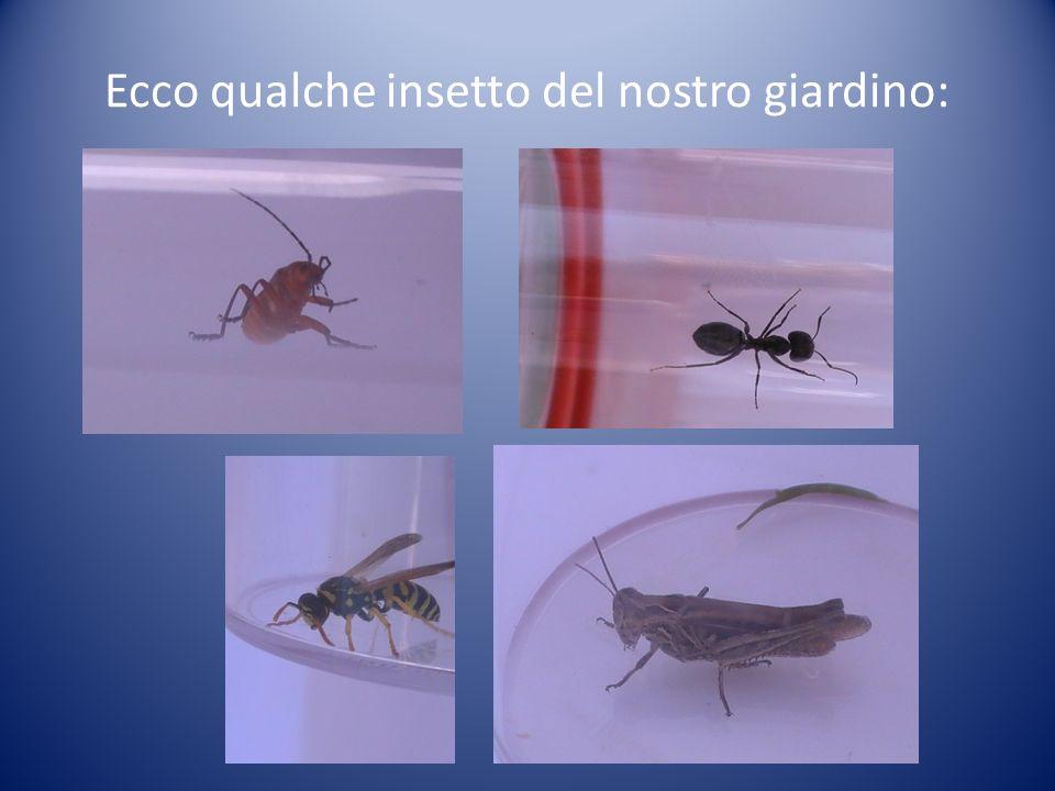 Ecco qualche insetto del nostro giardino: