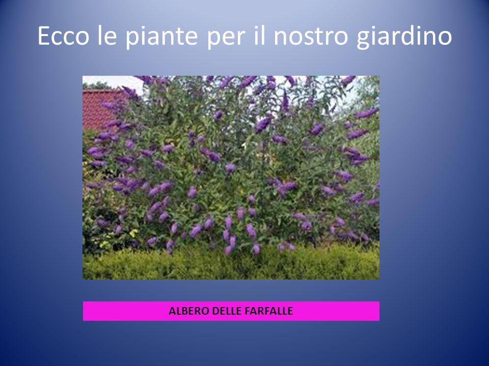 Ecco le piante per il nostro giardino ALBERO DELLE FARFALLE