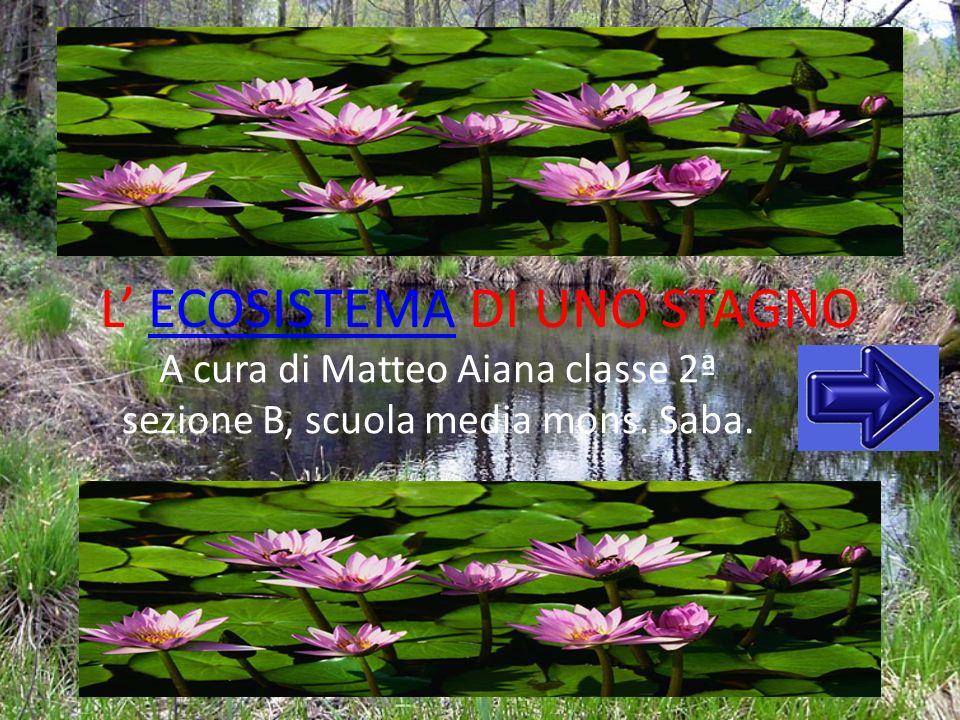 L ECOSISTEMA DI UNO STAGNOECOSISTEMA A cura di Matteo Aiana classe 2ª sezione B, scuola media mons. Saba.