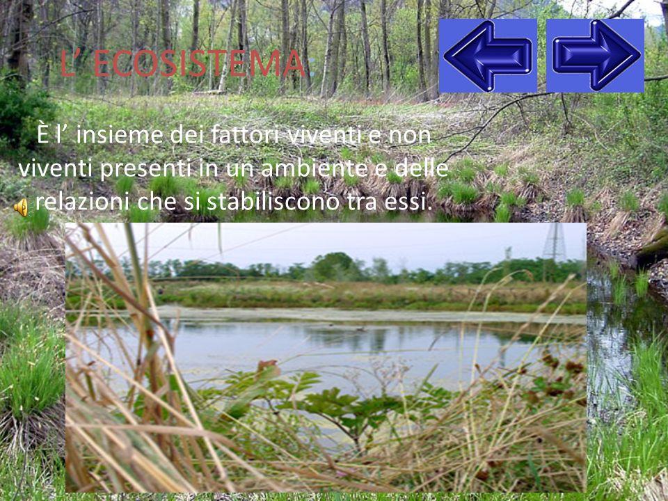 Lo stagno: cosè??.Lo stagno è una piccola zona dacqua bassa e ferma.