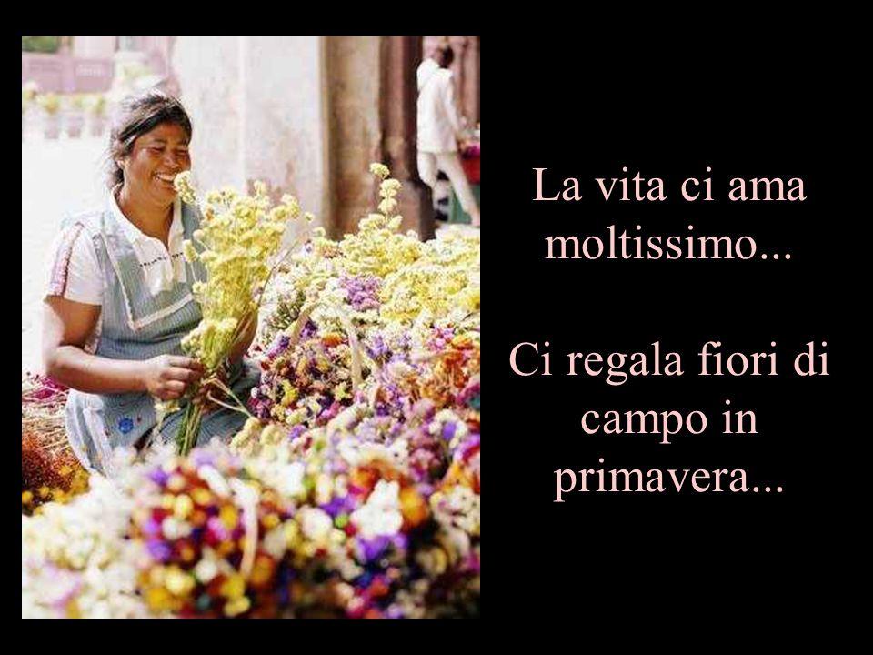 La vita ci ama moltissimo... Ci regala fiori di campo in primavera...