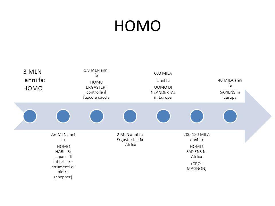 Caratteristiche antenati GenereEtàLuogoAndaturaCervelloAltro AUSTRALOPITECO7 mlnAfrica (Kenya) Eretta, bipede400-500 ccAfferra il cibo con le zampe anteriori HOMO HABILIS2.6-1.7 mlnAfricaEretta, bipede580-780 ccSi nutre di carne uccisa da altri predatori, fabbrica attrezzi di pietra, presa di precisione delle mani HOMO ERGASTER1.9 mlnAfrica, poi Asia ed Europa Eretta, bipede.