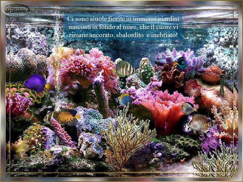 Vita. tempo, assenza di vuoti, quiete, pace, colore e sonorità: tutto questo è il meraviglioso mondo subacqueo. Vita. tempo, assenza di vuoti, quiete,