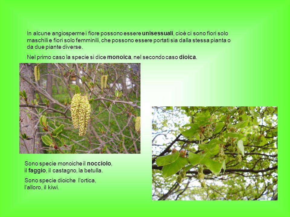 In alcune angiosperme i fiore possono essere unisessuali, cioè ci sono fiori solo maschili e fiori solo femminili, che possono essere portati sia dall
