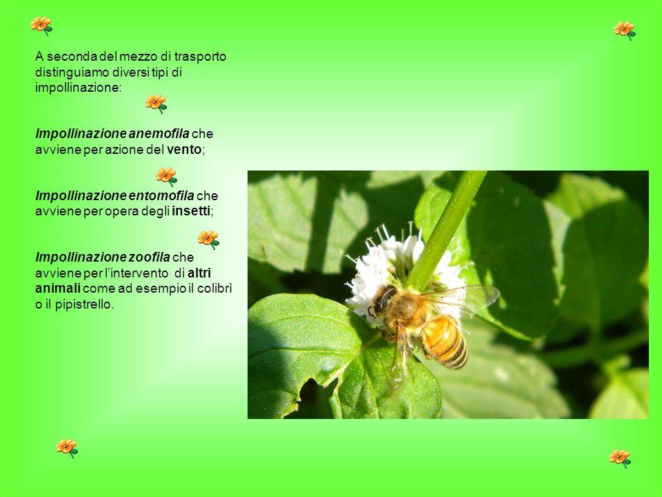A seconda del mezzo di trasporto distinguiamo diversi tipi di impollinazione: Impollinazione anemofila che avviene per azione del vento; Impollinazion