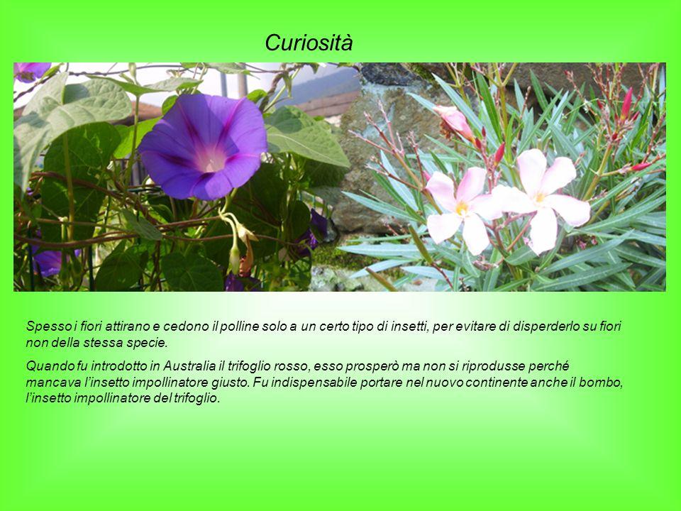 Curiosità Spesso i fiori attirano e cedono il polline solo a un certo tipo di insetti, per evitare di disperderlo su fiori non della stessa specie. Qu
