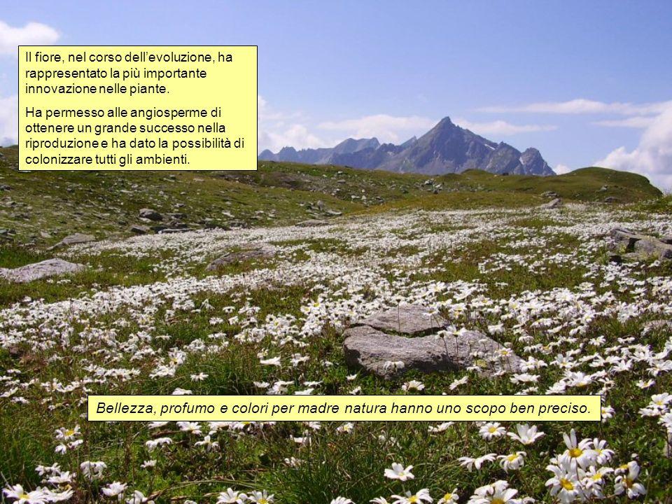 Il fiore, nel corso dellevoluzione, ha rappresentato la più importante innovazione nelle piante. Ha permesso alle angiosperme di ottenere un grande su