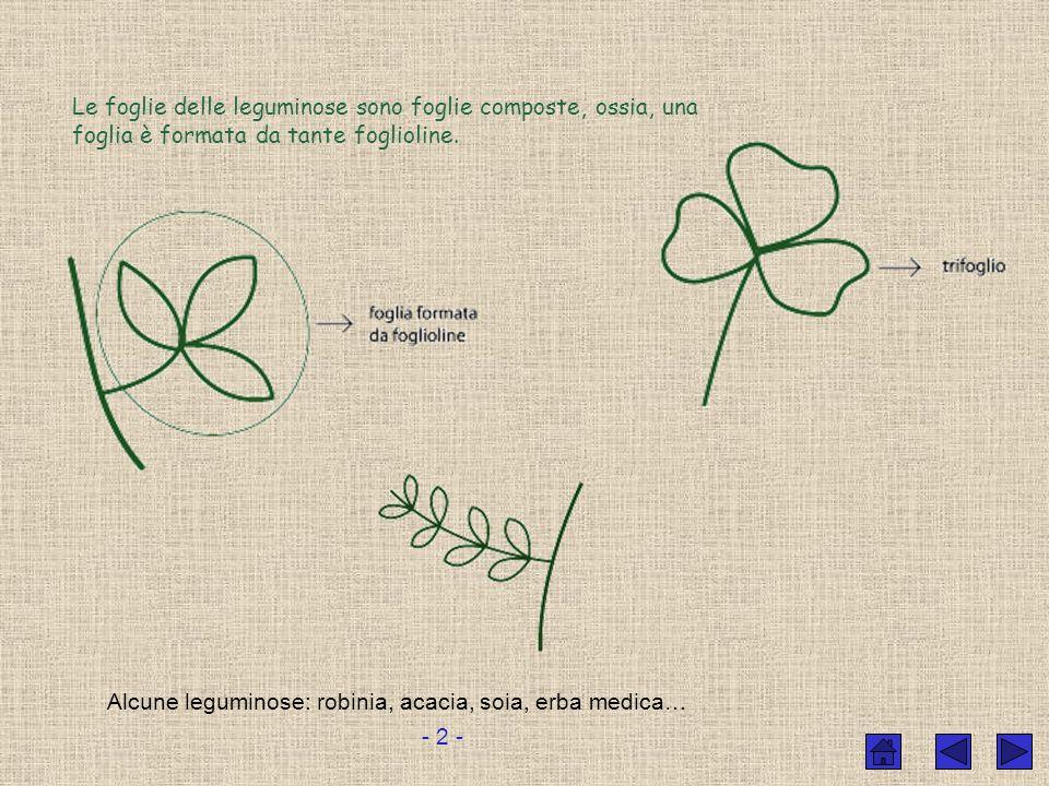 FRUTTO: LEGUME Fiore particolare che si riconosce abbastanza bene. Lovario è allungato e cresce fino a svilupparsi in un legume. - 1 -