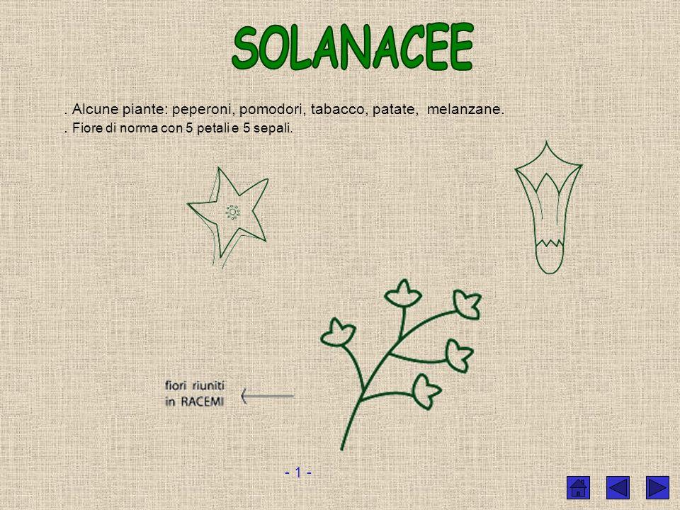 Le foglie delle leguminose sono foglie composte, ossia, una foglia è formata da tante foglioline. Alcune leguminose: robinia, acacia, soia, erba medic