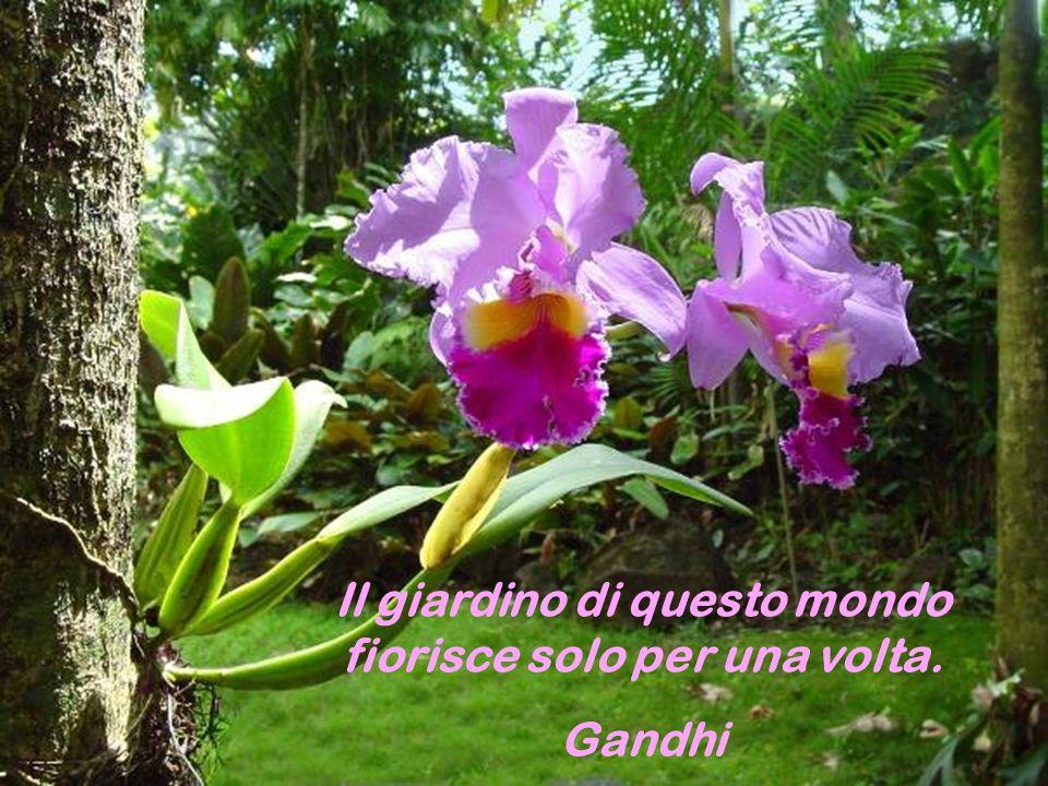 Il profumo dei fiori, o del sandalo, o dellincenso, o del gelsomino non risalgono il vento.