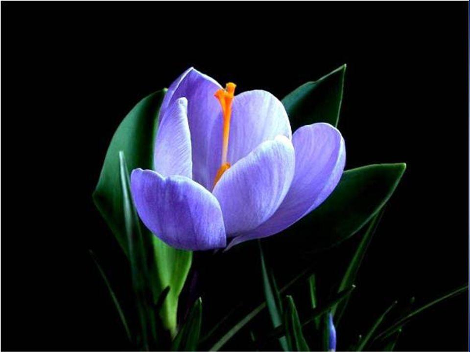 Ci sono dei giovani germogli destinati a non fiorire mai.