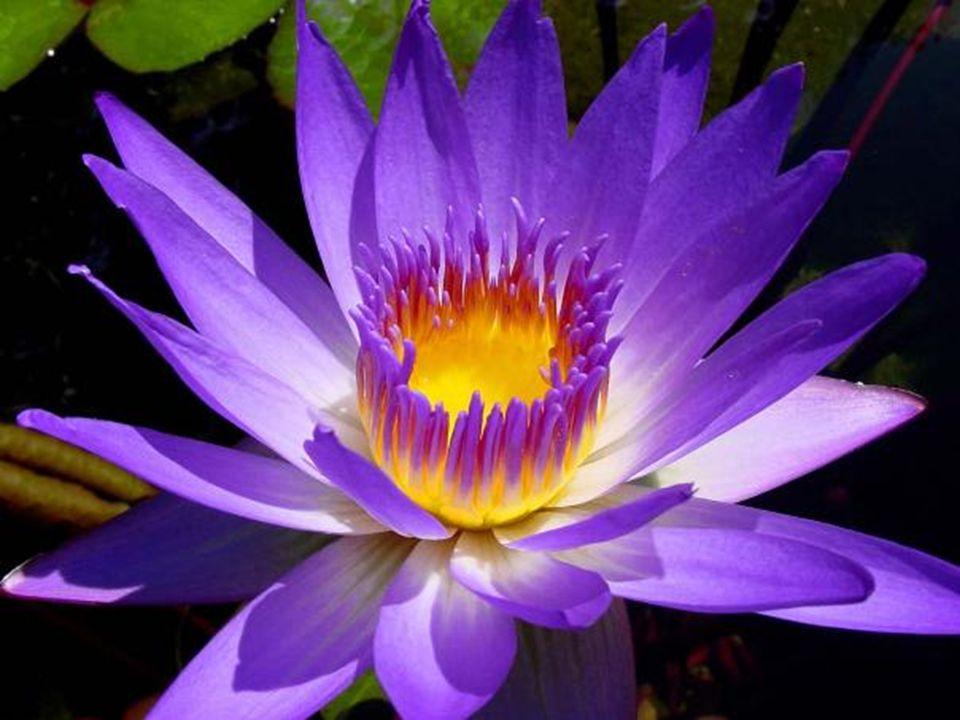 La vita è un fiore. L'amore ne è il miele. Victor Hugo