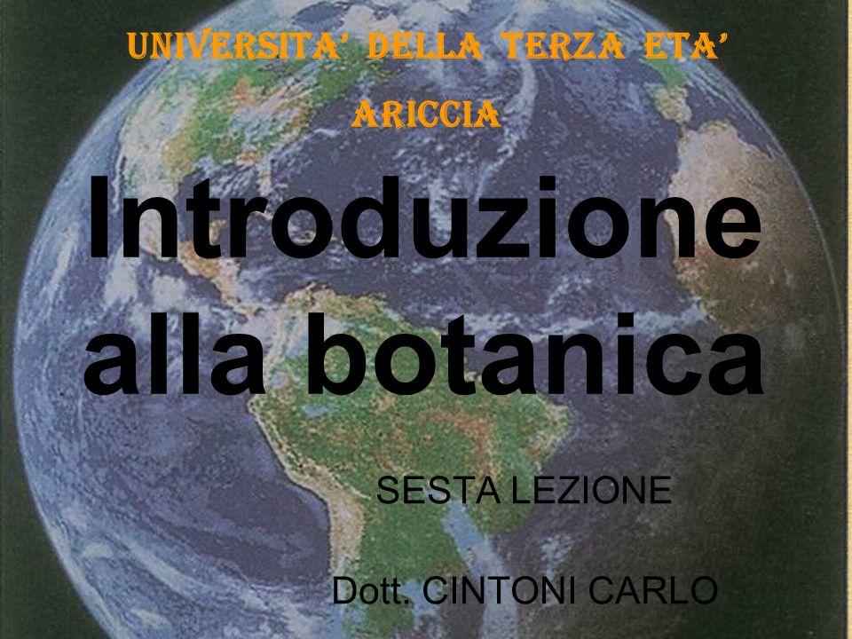 Introduzione alla botanica SESTA LEZIONE Dott. CINTONI CARLO UNIVERSITA DELLA TERZA ETA ARICCIA