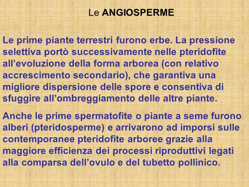 Le ANGIOSPERME Le prime piante terrestri furono erbe. La pressione selettiva portò successivamente nelle pteridofite allevoluzione della forma arborea