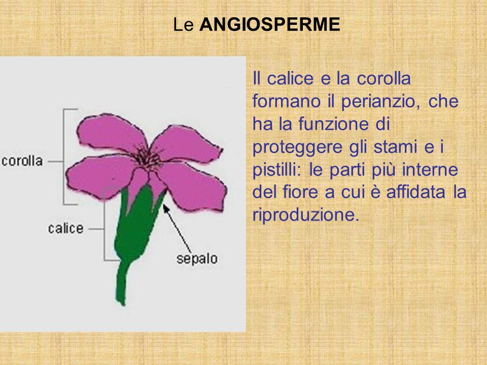 Il calice e la corolla formano il perianzio, che ha la funzione di proteggere gli stami e i pistilli: le parti più interne del fiore a cui è affidata