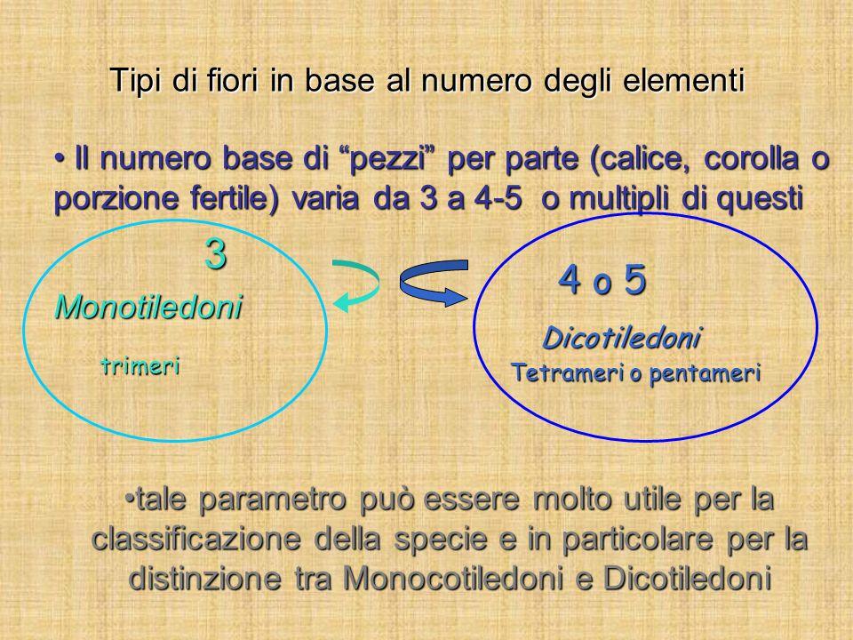 Tipi di fiori in base al numero degli elementi Il numero base di pezzi per parte (calice, corolla o porzione fertile) varia da 3 a 4-5 o multipli di q