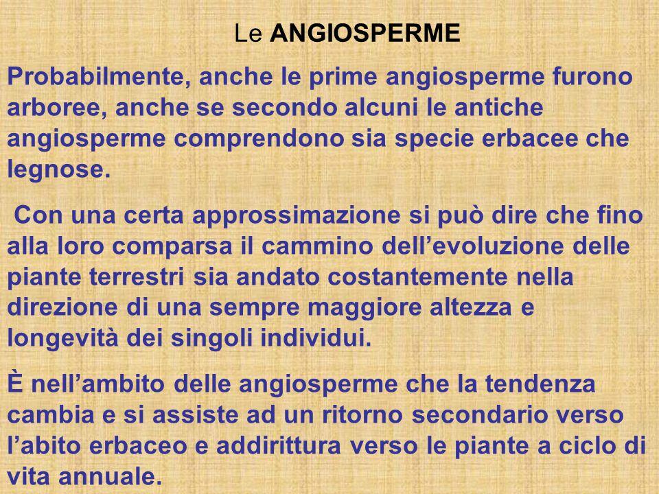 Le ANGIOSPERME Probabilmente, anche le prime angiosperme furono arboree, anche se secondo alcuni le antiche angiosperme comprendono sia specie erbacee