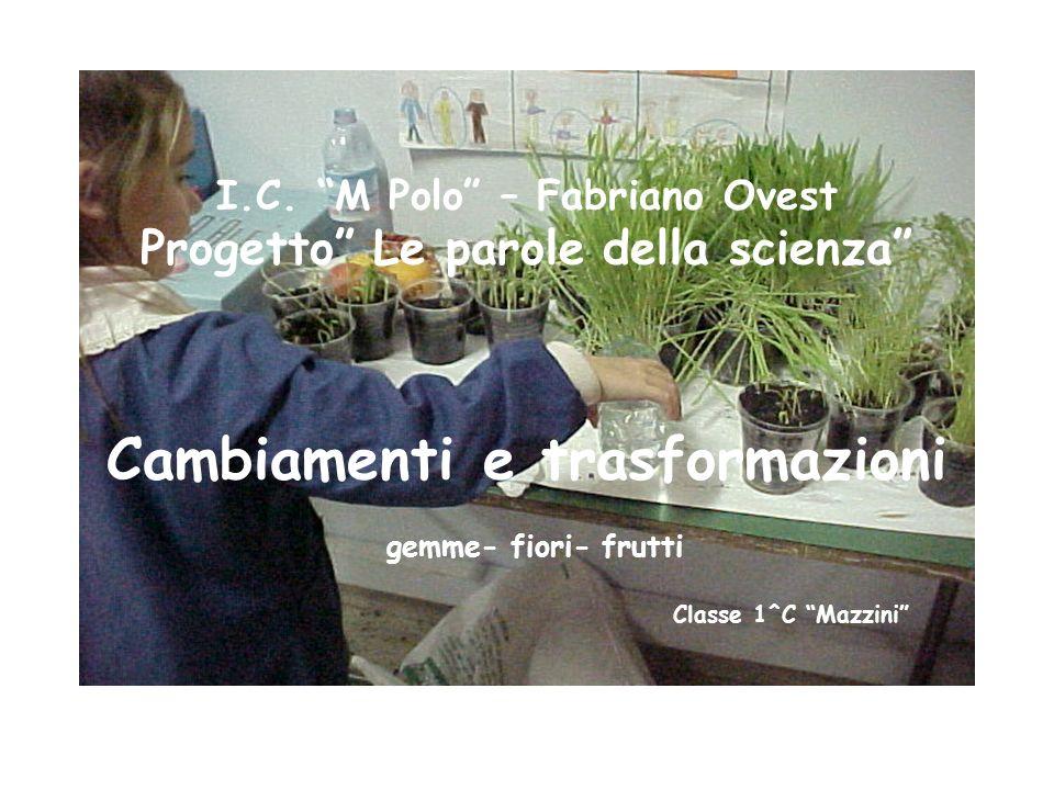 I.C. M Polo – Fabriano Ovest Progetto Le parole della scienza Cambiamenti e trasformazioni gemme- fiori- frutti Classe 1^C Mazzini