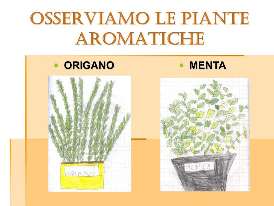 OSSERVIAMO LE PIANTE aromatiche ORIGANO ORIGANO MENTA MENTA
