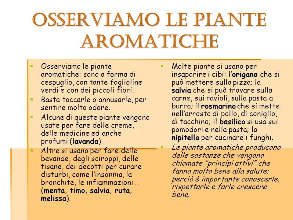 OSSERVIAMO LE PIANTE AROMATICHE Osserviamo le piante aromatiche: sono a forma di cespuglio, con tante foglioline verdi e con dei piccoli fiori. Basta