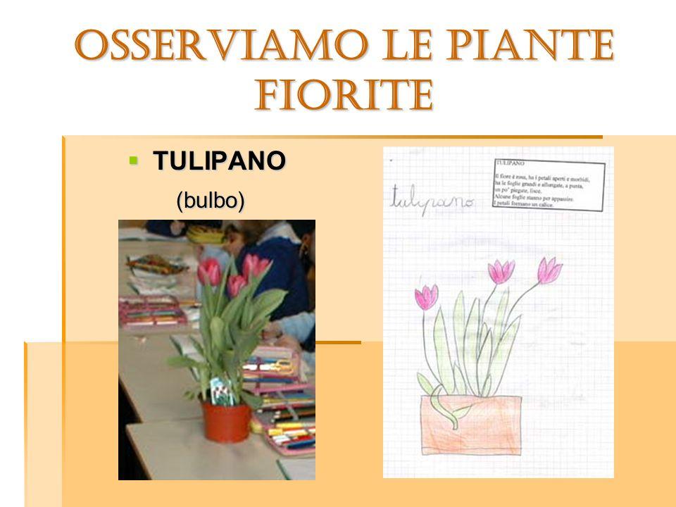 OSSERVIAMO LE PIANTE AROMATICHE Osserviamo le piante aromatiche: sono a forma di cespuglio, con tante foglioline verdi e con dei piccoli fiori.