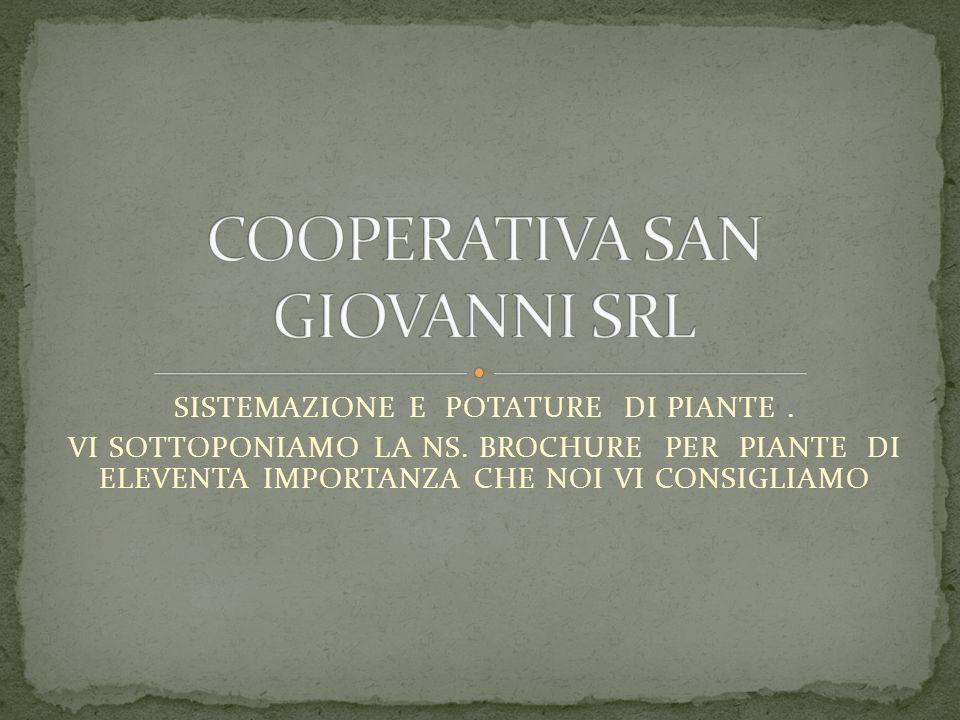 SISTEMAZIONE E POTATURE DI PIANTE.VI SOTTOPONIAMO LA NS.