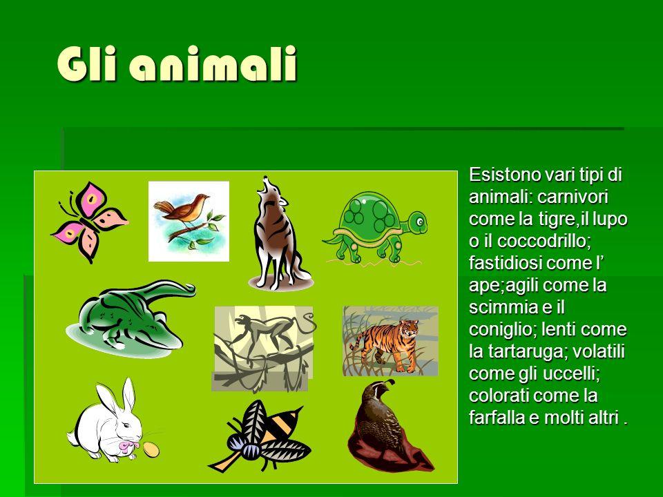 Gli animali Esistono vari tipi di animali: carnivori come la tigre,il lupo o il coccodrillo; fastidiosi come l ape;agili come la scimmia e il coniglio; lenti come la tartaruga; volatili come gli uccelli; colorati come la farfalla e molti altri.
