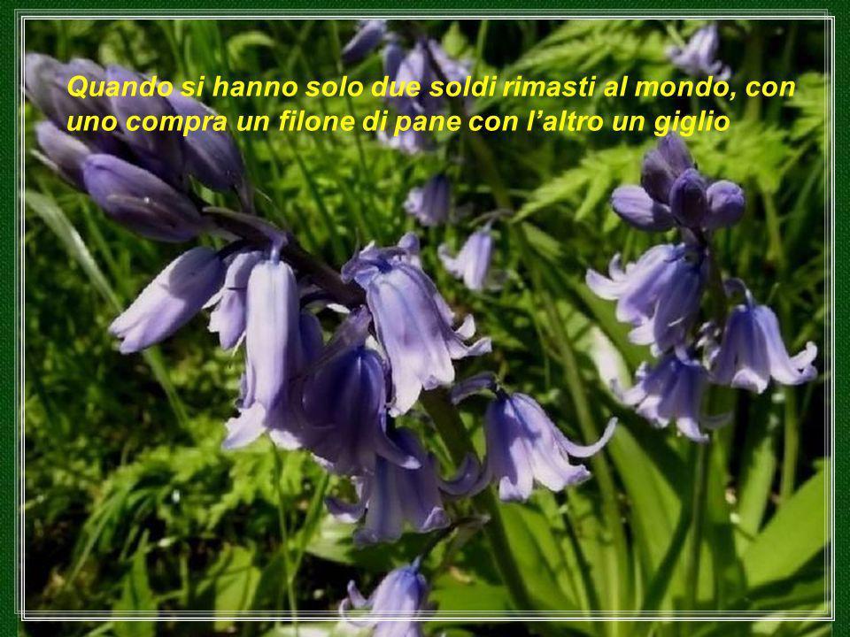 I fiori sembrano destinati al conforto dell'Umanità ordinaria.