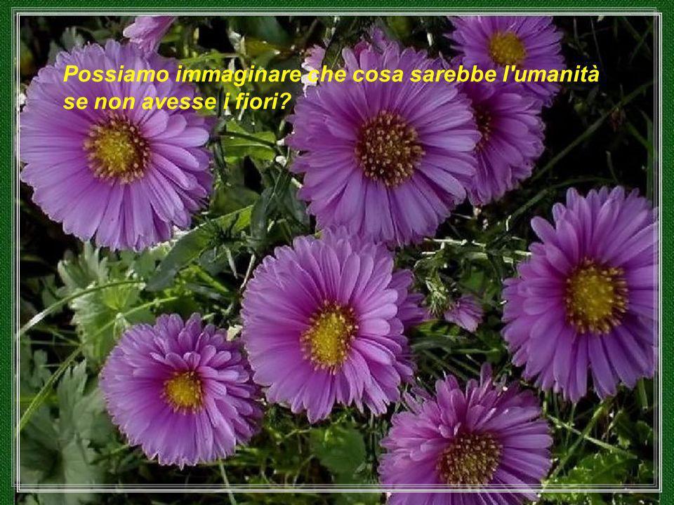 I fiori hanno una espressione del volto come gli uomini o animali.