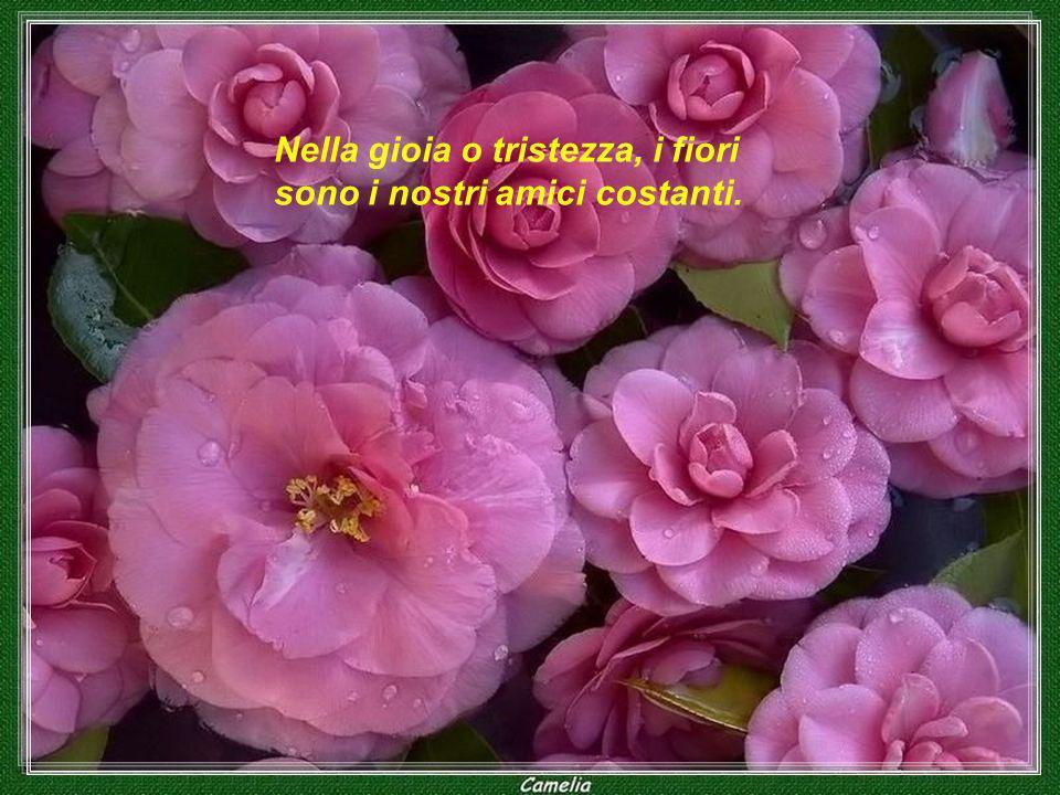 Dio amava i fiori e ha inventato il suolo. L'uomo amava i fiori e ha inventato i vasi