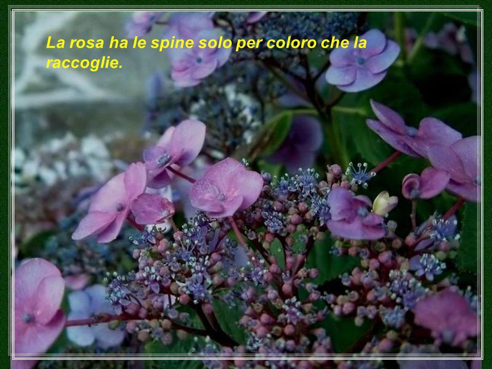 Chi vuole una rosa deve rispettare la spina.