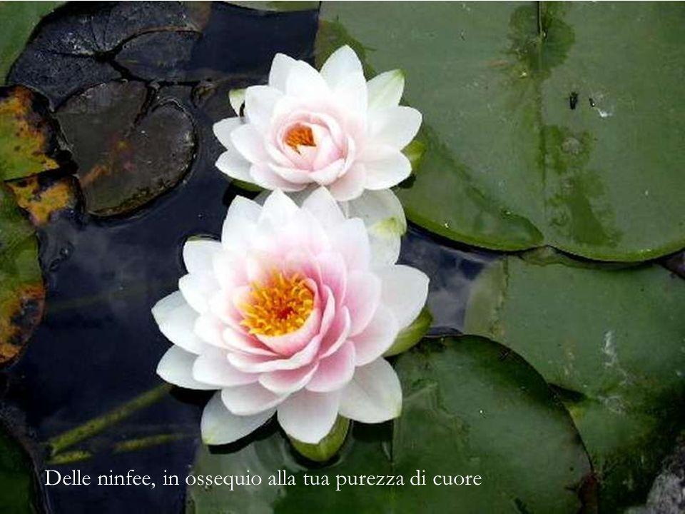 Dei fiori di amaryllis, espressione della tua fierezza