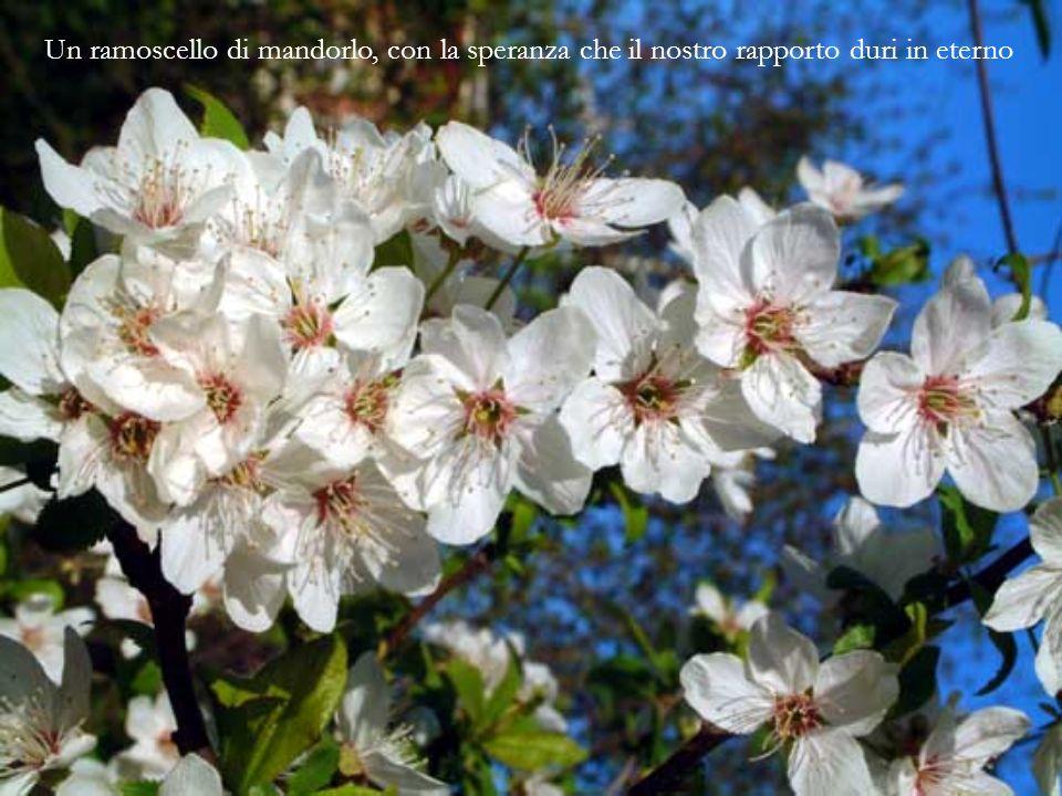 Una gardenia, per dichiararti la mia sincerità verso di te
