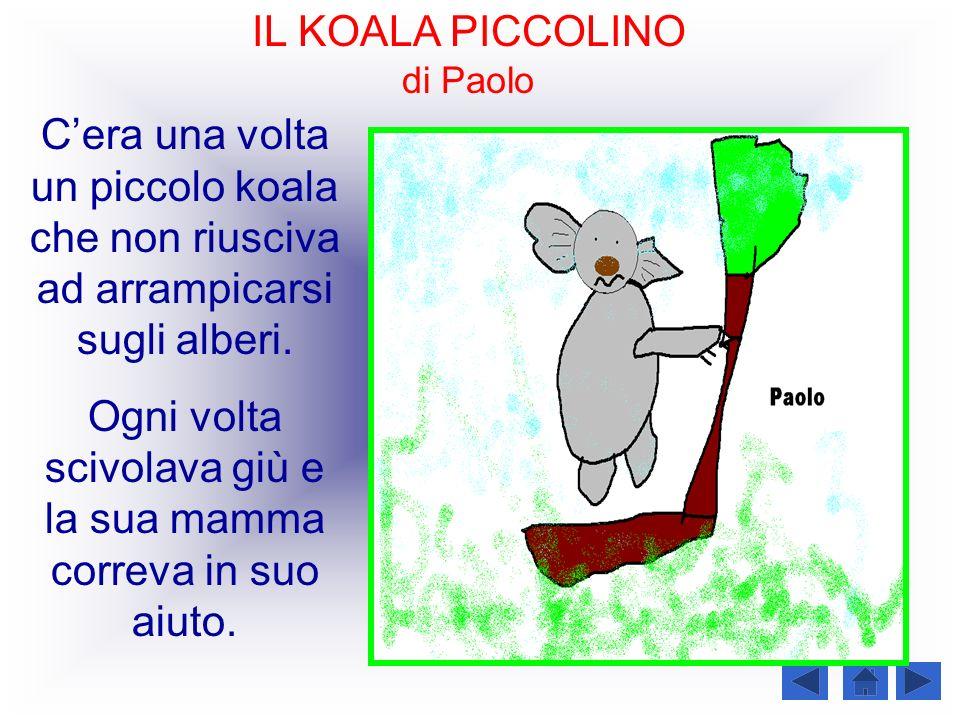 IL KOALA PICCOLINO di Paolo Cera una volta un piccolo koala che non riusciva ad arrampicarsi sugli alberi. Ogni volta scivolava giù e la sua mamma cor