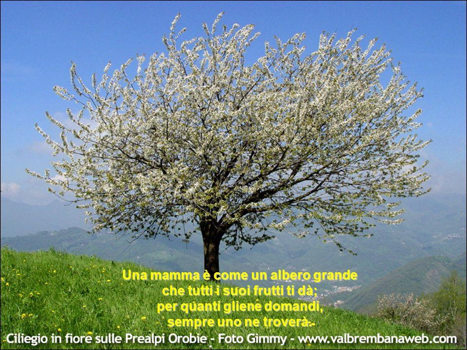 Una mamma è come un albero grande che tutti i suoi frutti ti dà; per quanti gliene domandi, sempre uno ne troverà.