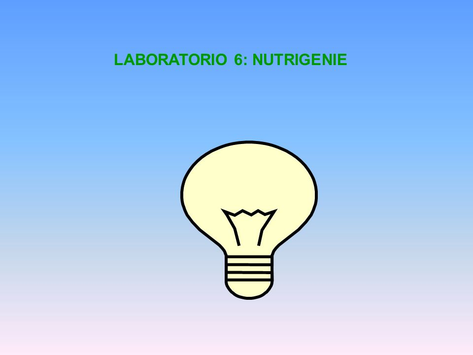 LABORATORIO 6: NUTRIGENIE