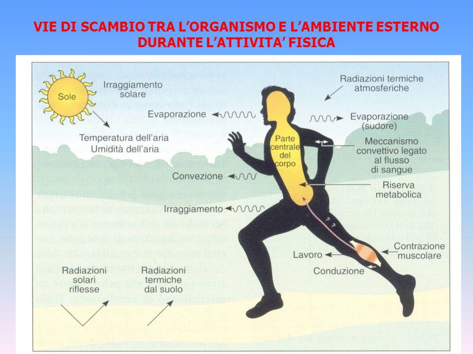 VIE DI SCAMBIO TRA LORGANISMO E LAMBIENTE ESTERNO DURANTE LATTIVITA FISICA