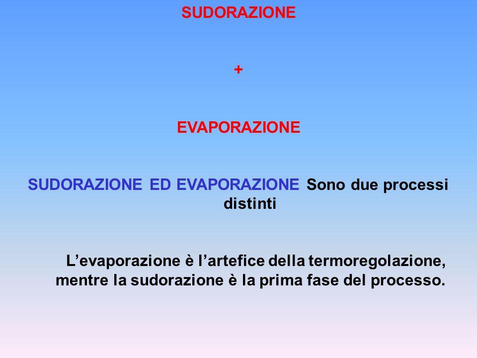 SUDORAZIONE + EVAPORAZIONE SUDORAZIONE ED EVAPORAZIONE Sono due processi distinti Levaporazione è lartefice della termoregolazione, mentre la sudorazi