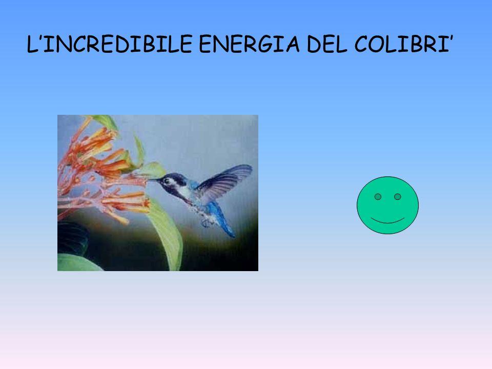 LINCREDIBILE ENERGIA DEL COLIBRI