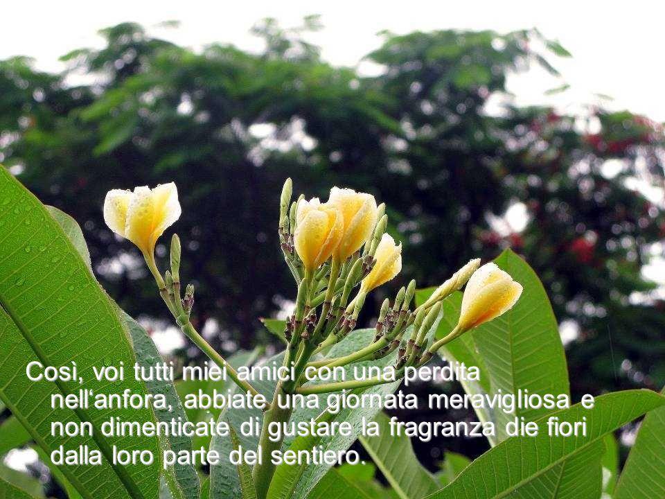 Così, voi tutti miei amici con una perdita nellanfora, abbiate una giornata meravigliosa e non dimenticate di gustare la fragranza die fiori dalla lor